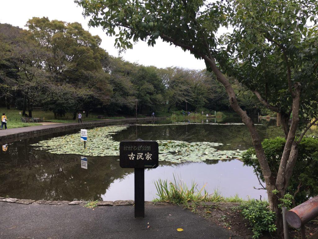 仲町台の池の写真。